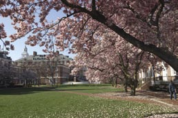 Adjacent to the Wyman Quadrangle (the Engineering quad, pictured here in springtime), a new quad is under construction: the Alonzo G. and Virginia G. Decker Quadrangle.