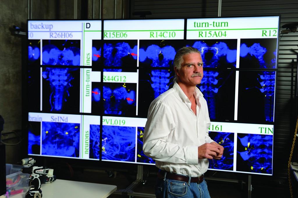 Mapping Drosophilia's Brain