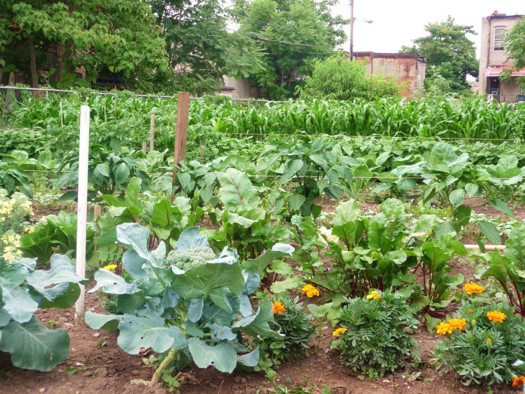 Garden in Baltimore
